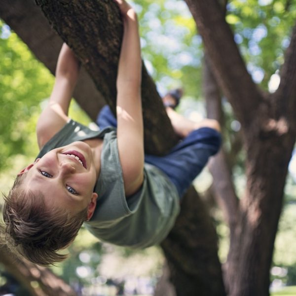 Little boy aged 8 in forest or park climbing a tree. Little boy is hanging from the branch and laughing at the camera. Nikon D850.